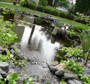 искусственный водоем на дачном участке